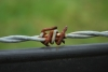 rusty-barb-wire-1427473-s